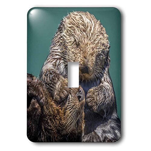 3dRose Danita Delimont - Otters - USA, California, Morro Bay State Park. Sea Otter mother with pup. - 2 plug outlet cover ()