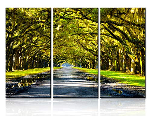 TUMOVO 3 Pieces Scott Stulberg Premium Canvas Wall Art Print Entitled Oak Tree Lined Road at Boone Hall Plantation, Charleston Wall Decorations for Living Room Ready to Hang(28''x42'')
