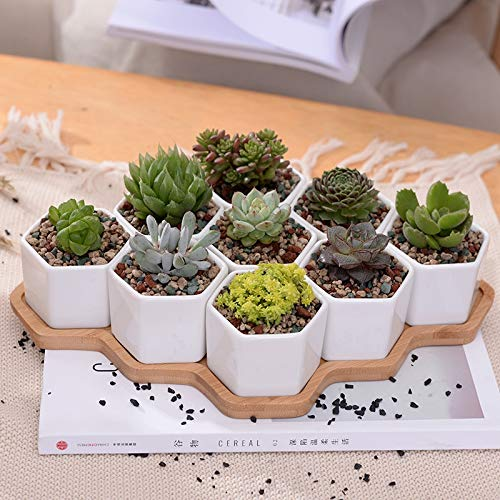 Set of 9 Hexagon Flowerpots White Ceramic Succulent Plant Pot with Bamboo Stand Bonsai Planter Home Decor Ornament (Blue And White Ceramic Elephant Plant Stand)
