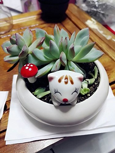 Cute Animal Shaped Cartoon Home Decoration Succulent Flower Plant - Flowers Cat Shaped