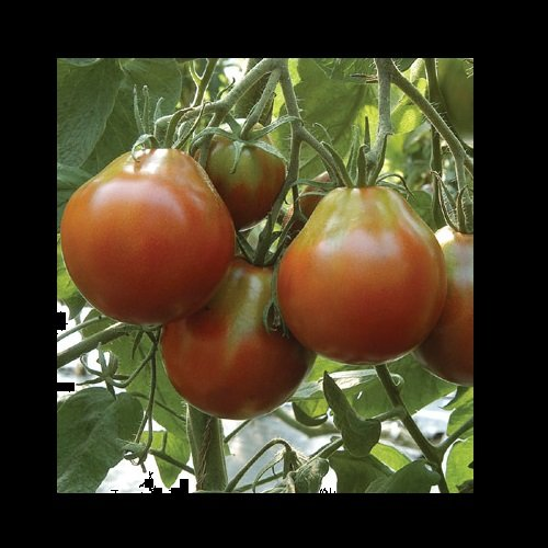 100-japanese-black-trifele-tomato-seeds-heirloom-tomato-organic