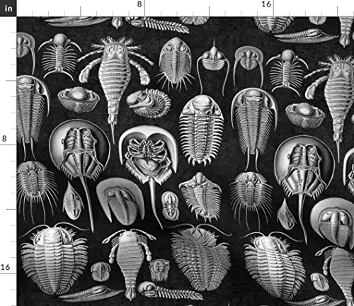 Antique Mollusks Fabric - Horseshoe Crab Ernst Haeckel Mollusk Black and White Sea Life Fossils Ocean Print on Fabric by The Yard - Sport Lycra for Swimwear Performance Leggings Apparel Fashion (Fossil Crab)