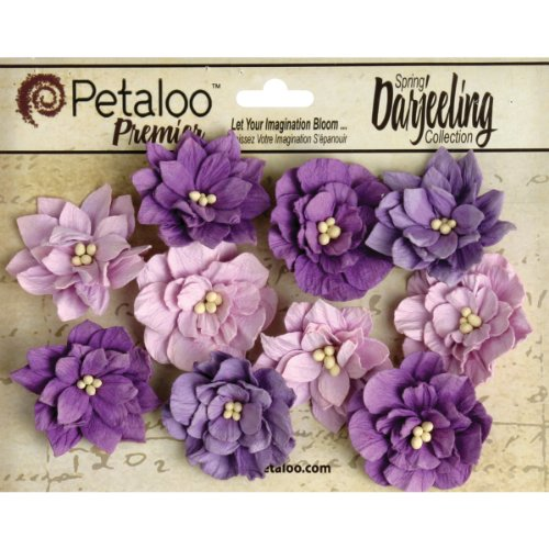 Petaloo Darjeeling Teastained Dahlia Flowers, Purple, 10-Pack