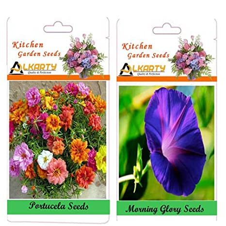 Alkarty Portulaca And Morning Glory Seeds Pack Of 20 (Summer