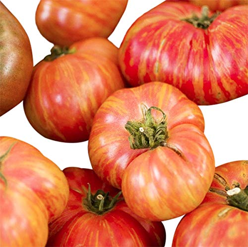 (Organic Big Rainbow Heirloom Tomato Seeds - Large Tomato - One of The Most Delicious Tomatoes for Home Growing, Non GMO - Neonicotinoid-Free.)