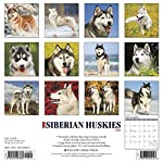 Just Siberian Huskies 2020 Wall Calendar (Dog Breed Calendar) 3