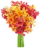 KaBloom Fall Collection: Exotic Red and Golden Yellow Mokara Orchids from Thailand without Vase