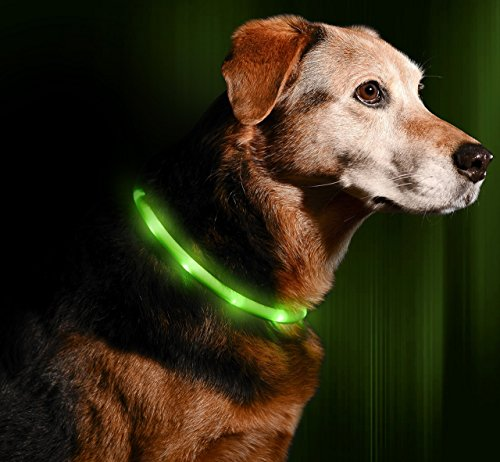 (Illumiseen LED Dog Necklace Collar - USB Rechargeable Loop - Available in 6 Colors - Makes Your Dog Visible, Safe & Seen)