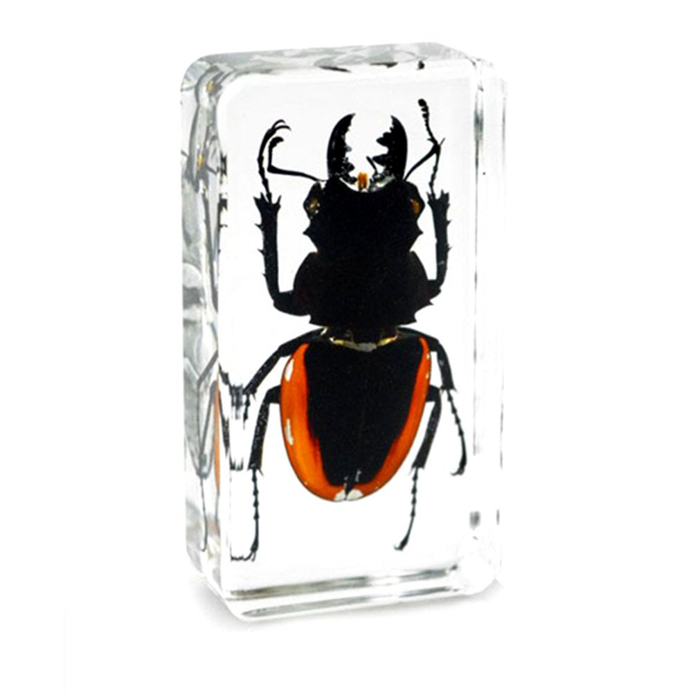 Black Scorpion for Men Biology Science Teacher Kids Education QTMY Insect in Resin Specimen Collection Paperweight for Office Desk