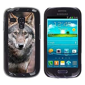Qstar Arte & diseño plástico duro Fundas Cover Cubre Hard Case Cover para Samsung Galaxy S3 III MINI (NOT REGULAR!) / I8190 / I8190N ( Wolf Wild Dog Brown Forest Fairytale Eyes)