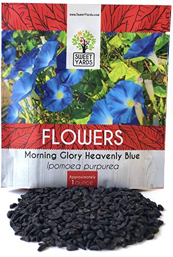 Morning Glory Seeds Heavenly Blue - Large 1 Ounce Packet - Over 1,000 Flower -