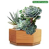 CUUCOR Modern Bamboo Succulent Planter Pot,Indoor Plant Holder for Succulent Plants/Mini Cactus/Artificial Flowers/Air Plant
