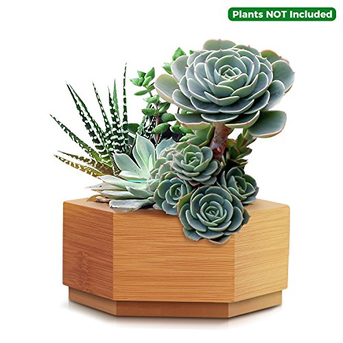 CUUCOR Modern Bamboo Succulent Planter Pot,Indoor Plant Holder for Succulent Plants/Mini Cactus/Artificial Flowers/Air Plant