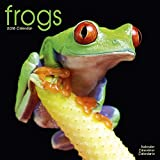 Frog Calendar - Cute Animal Calendar - Calendars 2017 - 2018 Wall Calendars - Animal Calendar - Frogs 16 Month Wall Calendar by Avonside