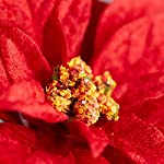 Factory-Direct-Craft-12-Red-Velvet-Leaf-Poinsettia-Holiday-Picks-for-Christmas-Home-Dcor