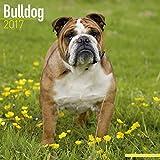 English Bulldog Calendar 2017 - Dog Breed Calendars - 2016 - 2017 wall calendars - 16 Month by Avonside