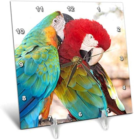 3dRose USA, Florida, Orlando, Blue-and-Yellow Scarlett Macaw. -Desk Clock, 6 by 6-inch dc_206694_1 , 6 x 6