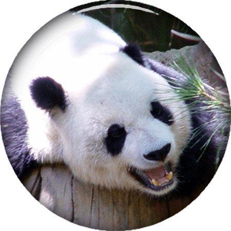 ゴルフボールマーカー3 / 4インチ19 – 20 mm , Assorted新しいデザインから選択する。。。  Panda Bear head B075QCXLJV