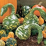 Seeds and Things Swan or Speckle Gourd 10 + Seeds EASY TO GROW!
