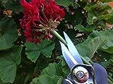 Gardenite Ultra Snip 6.7 Inch Pruning Shear with