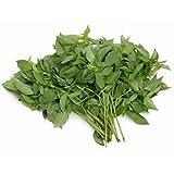 Fresh Thai Basil (Sweet) (100g)