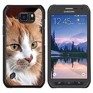 Caucho caso de Shell duro de la cubierta de accesorios de protecci¨®n BY RAYDREAMMM - Samsung Galaxy S6Active Active G890A - Gato noruego del bosque de Maine Coon