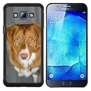 YiPhone /// Prima de resorte delgada de la cubierta del caso de Shell Armor - Pato de Nueva Escocia Perro perdiguero tocante del perro - Samsung Galaxy A8 A8000