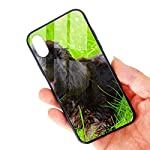 Irish Water Spaniel iPhone X/XS Case, TPU Bumper Protective-Compatible 6