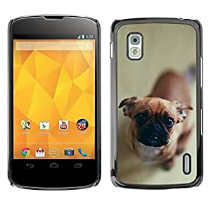 YOYO Slim PC / Aluminium Case Cover Armor Shell Portection //Cute Curious Dog //LG Google Nexus 4