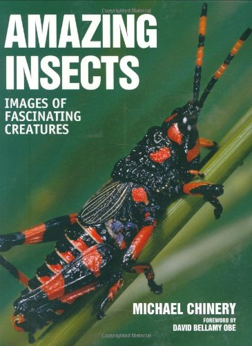 Amazing Insects: Images of Fascinating Creatures (Insects Amazing)