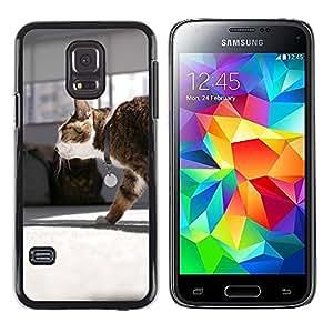 Hot Style Cell Phone PC Hard Case Cover // M00116141 Cat Mia Walk Pet // Samsung Galaxy S5 MINI SM-G800