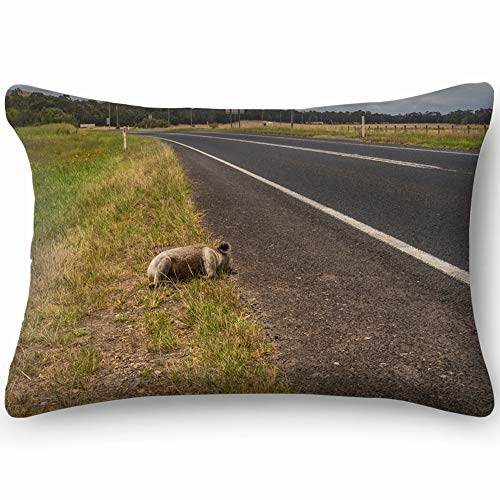 Dead Koala Aside Road Australia Which Animals Wildlife Transportation Cotton Linen Blend Decorative Throw Pillow Cover Cushion Covers Pillowcase Pillow Shams, Home Decor Decorations For Sofa Couch Bed (The Best Sofa Bed Australia)