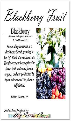 Big Pack - BlackBerry Fruit, Rubus Allegheniensis, Seeds - Non-GMO Seeds (BlackBerry (1,000 - Seeds Blackberry