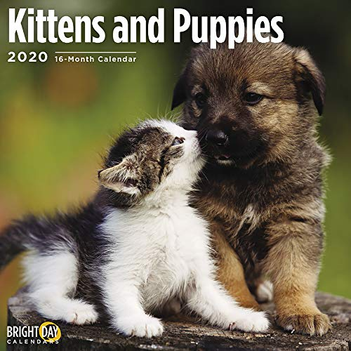 2020 Kittens and Puppies Wall Calendar by Bright Day, 16 Month 12 x 12 Inch, Cute Cat Kitty Animals Feline Canine