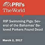 RIP Swimming Pigs: Several of the Bahamas' Beloved Porkers Found Dead |  The World staff