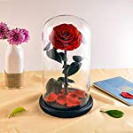 Eternal-Rose-Preserved-Flower-Rose-Handmade-Fresh-Flower-Rose-with-Beautiful-Glass-Dome-a-Gift-for-Valentines-Day-Mothers-Day-Christmas-Anniversary-Birthday-Thanksgiving-GirlsThriving