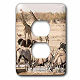 3dRose Danita Delimont - Wildlife - Africa, Namibia, Etosha, National Park. Various animals at waterhole. - Light Switch Covers - 2 plug outlet cover (lsp_276517_6)