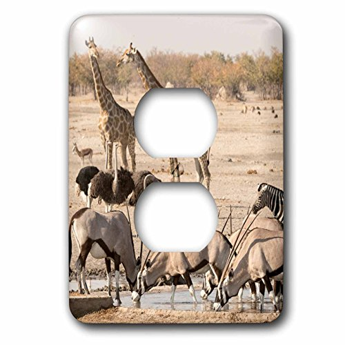 3dRose Danita Delimont - Wildlife - Africa, Namibia, Etosha, National Park. Various animals at waterhole. - Light Switch Covers - 2 plug outlet cover (lsp_276517_6) by 3dRose