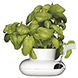 Sagaform 5007162 Stoneware White Single Herb Pot