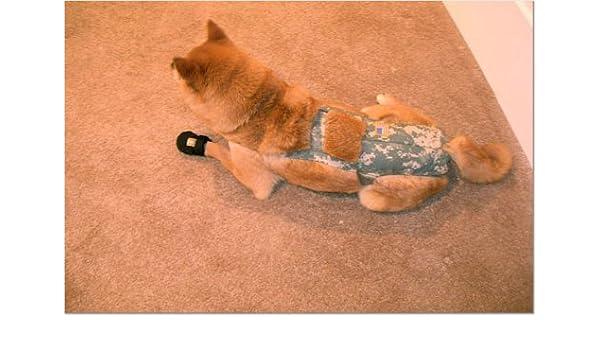 Joybies Pantalones cortos para perro galgo macho adulto delgado X Grande Camuflaje: Amazon.es: Productos para mascotas