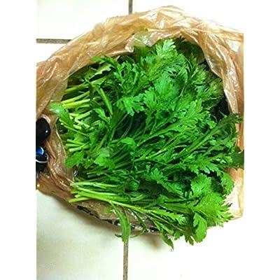 2-oz Small Serrated Tong Ho/Hao 小切葉茼蒿 (VRZ) Seeds, Edible Chrysanthemum; Shungiku Vietnamese Tần Ô, Rau Cú, Caỉ Cúc : Garden & Outdoor