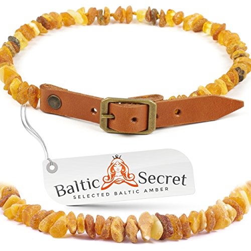 Amber Dog and Cat Collar, Certified Raw Baltic Amber Gems That are 50% Richer and Higher in Value - from Baltic Secret /OR35-40/