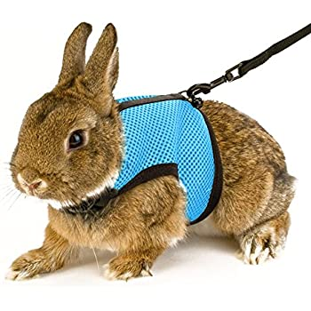 how to put on a rabbit harness