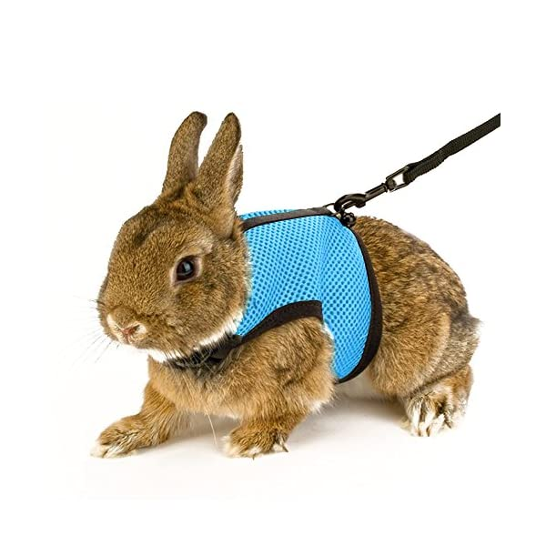 Calunce Soft Rabbits Harness with Leash 1