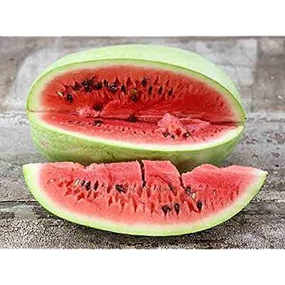 90 Seeds/Watermelon Seeds Charlston Grey Seeds from Ukraine : Garden & Outdoor