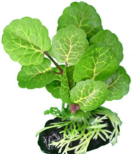 Elephant Leaf Betta Plant - Great For Betta Fish and Use With Blue Spotted Betta Leaf Pad & Betta Log (Elephant Leaf)