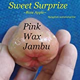 ~ROSE APPLE~ SWEET SURPRIZE Syzygium samarangense FRUIT TREE Wax Jambu Plant