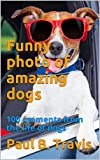 Funny photo of amazing dogs: 100 moments from the life of dogs