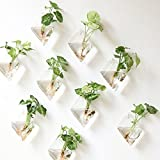 O.RoseLif Rhombus Glass Wall Vase Hang Planters