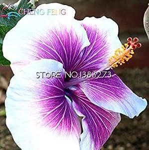 A la venta 100pcs semillas de hibisco 17kinds Hibiscus rosa sinensis de flor de hibisco árbol bonsai semillas de plantas en macetas de flores de las habitaciones *